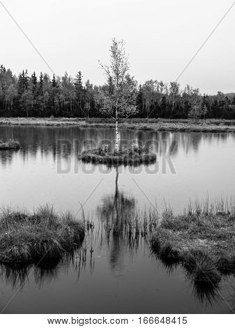 Evening time at Chalupska Moor Lake near Borova Lada, Sumava Mountains, Czech Republic, Europe. Small islands with trees in the middle of peat-bog. Black and white image.