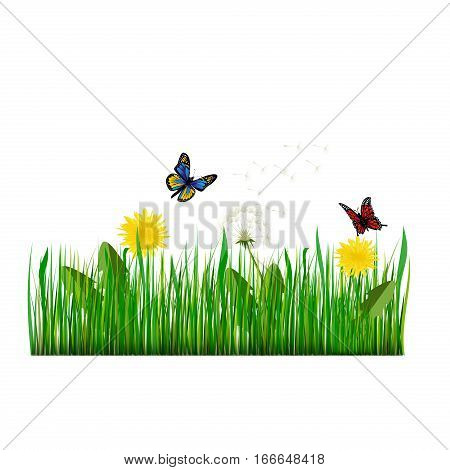 Green grass with dandelion season foliage abstract. Vector Illustration green grass nature meadow field. Plant environment fresh lush growth day land pattern.