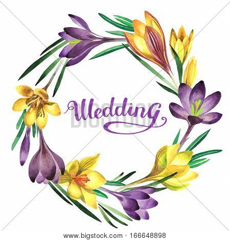 Wildflower crocuses flower wreath in a watercolor style isolated. Full name of the plant: crocuses, saffron. Aquarelle wild flower for background, texture, wrapper pattern, frame or border.