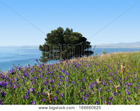 Blue Flowers In The Fore Ground, With  A tree And Sea In The Back Ground 12asw