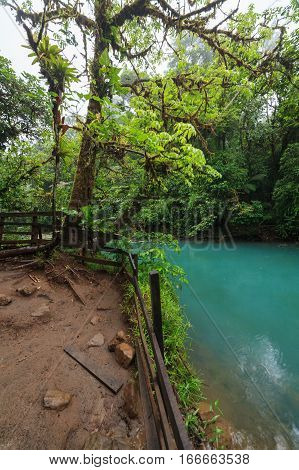 Rio celeste and lush rainforest at Tenorio national park Costa Rica
