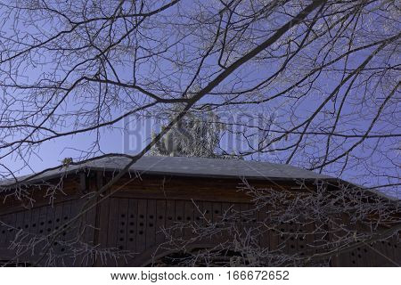 Frozen branches above the band kiosk with blue sky
