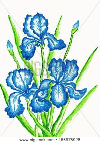 Three dark blue irises hand painted picture watercolours. Size of original 295 x 21 sm.
