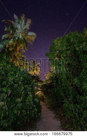 Amazing night landscape of road in jungles