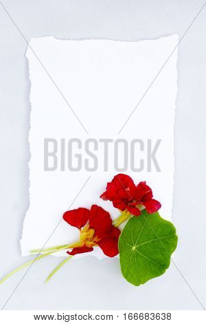 Summer floral background with red nasturtium and white torn paper with copy space.
