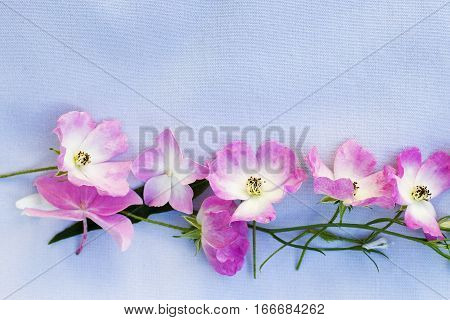 Beautiful floral background with pink roses and hortensia on gray background