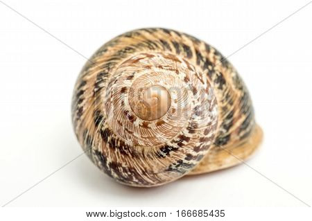 Land snail. Front view of the spiral. An isolated snail shell over a white background spiral natural design, brown beige colors