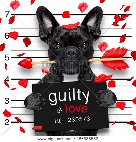 Mugshot Dog On Valentines