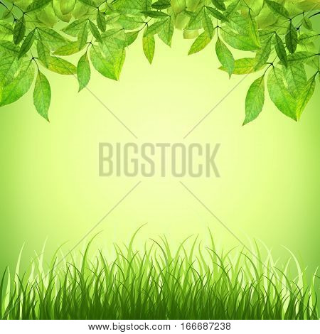 Spring background. Young leaves and grass in the sunlight. Summer. A park. Regeneration. Close-up. Nature awoke.