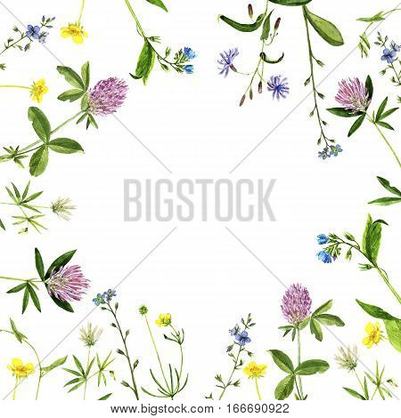Watercolor drawing wild flowers and herbs, painted wild plants, botanical illustration in vintage style, color floral background, hand drawn natural template, decorative herbal backdrop