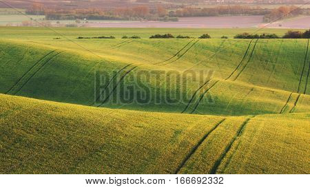 Green fields in the evening in South Moravia, Czech Republic. Waves hills with green grass, rolling fields. Beautiful spring landscape at sunset. Agriculture. Colorful nature background. Concept