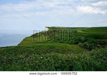 Wild grass on the seacoast and ocean as background, Normandy, France.