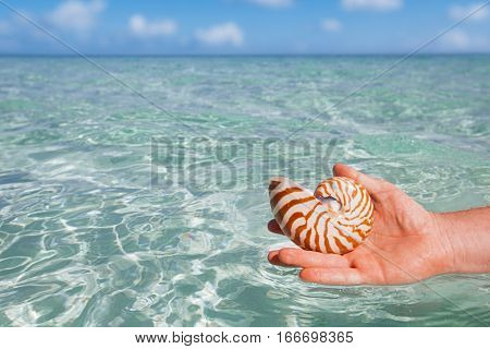 nautilus shell holding by men's hand, seascape, live action