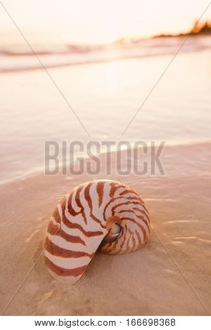 nautilus shell on beach in sunrise light, seascape, live action