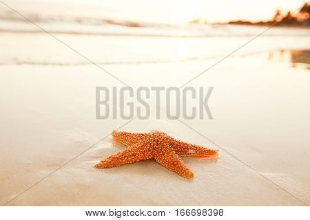 starfish shell on beach in sunrise light, seascape, live action