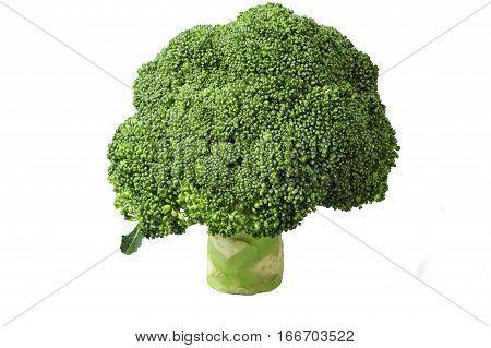 Green broccoli on white background, Broccoli organic