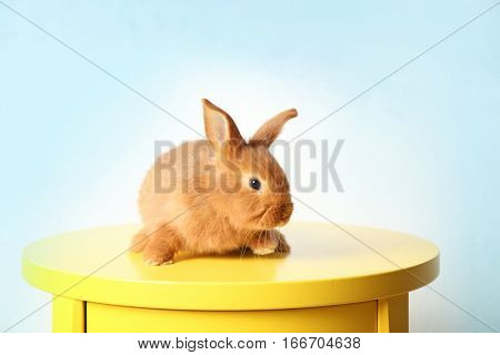 Cute foxy rabbit sitting on yellow table