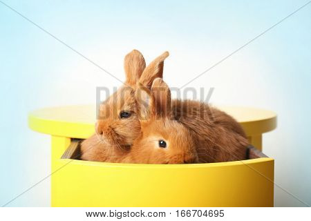 Two cute foxy rabbits sitting in yellow drawer