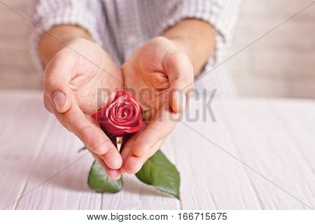 Love Concept. Man Holding Orange Rose In Heart Shaped Hands. Valentine's Postcard