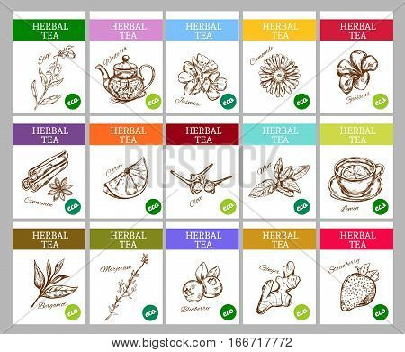 Sketch herbal tea labels collection with different organic healthy natural aromatic ingredients vector illustration