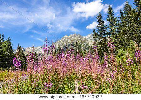 Picturesque View Of Tatra Mountains, Slovakia
