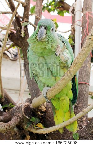 Green parrot bird sitting on the perch