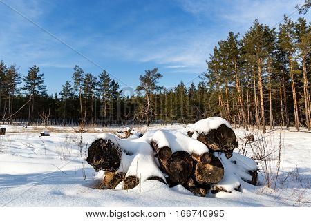 winter landscape with old logs under snow on meadow in forest