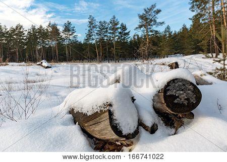 winter landscape in forest meadow