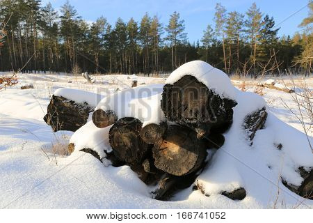 wooden logs under snow in forest in nice winter day