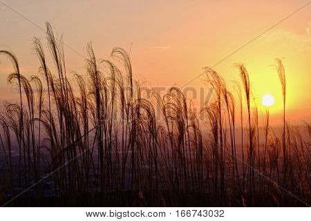 Glowing sunrise over city. Grass in golden morning light . Sharp image correct composition deep warm colors. Nara. Japan.