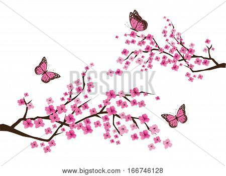 vector illustration of cherry blossom branches with butterflies
