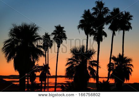 Silhouetted palms against early morning sky in desert
