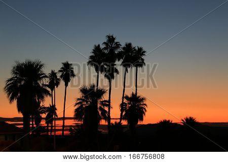 Desert palms silhouetted against sunrise, early morning sky