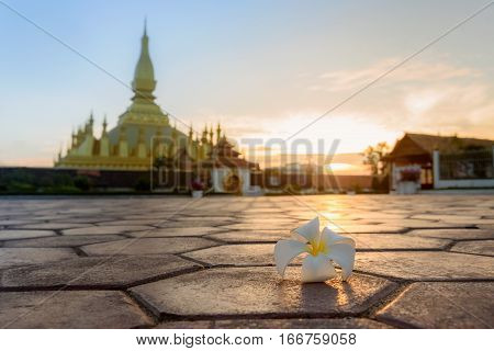Plumeria (Champa flower); the symbol flower of Laos; in sunrise with Pha That Luang Stupa Vientiane background