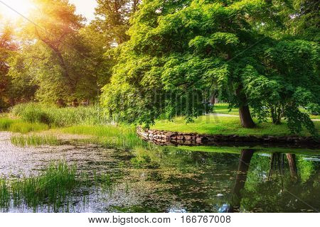 Sunlit reflection over a lake in a tranquil park in Halifax, Nova Scotia.