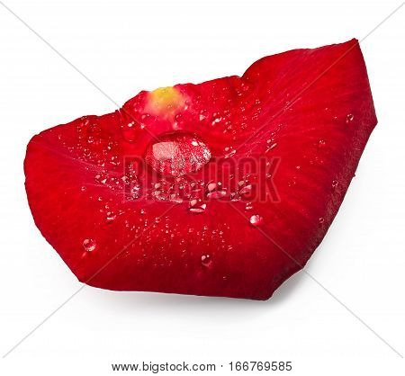 Red rose petal isolated on white background