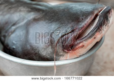 Closeup are the head of the big river fish - catfish..