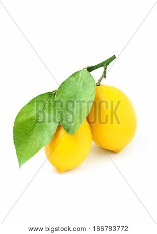 Lemons on a branch isolated on a white background.
