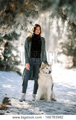 Girl with dog Malamute on walk in winter forest near pines. She stands and keeps the dog.