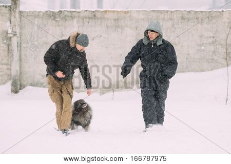 Gomel, Belarus -  January 8, 2017: Two Men is engaged in dog training. Keeshond Dog Playing Outdoor In Snow, Winter Season.