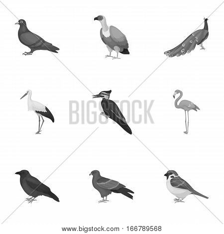 Bird set icons in monochrome style. Big collection of bird vector symbol stock