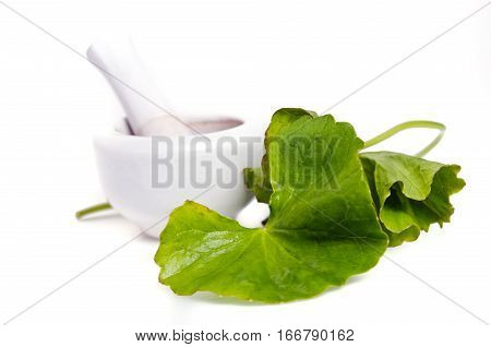 Centella asiatica (Also called as Asiatic Pennywort Centella Urban gotu kola ayuvera Thankuni in Indian Buabok in Thailand Simon wort) leaf with mortar isolated on white