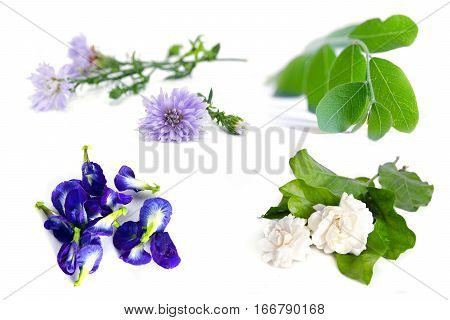 Group of plant and flower (Moringa plant leaf jasmine flower butterfly pea blue pea and violet flower) isolated on white background