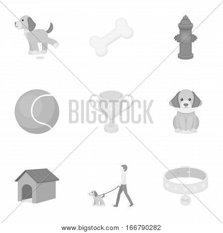 Dog equipment set icons in monochrome style. Big collection dog equipment vector symbol stock