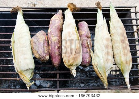 Roasted and grilled corns (maize) on charcoal stove which is a healthy vegetarian barbeque type food menu very famous in Thailand street food
