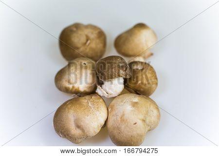 shiitake mushroom on white background, delicious , oranic