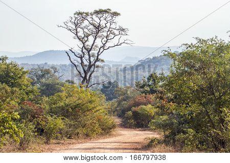 Punda Maria landscape in Kruger national park, South Africa