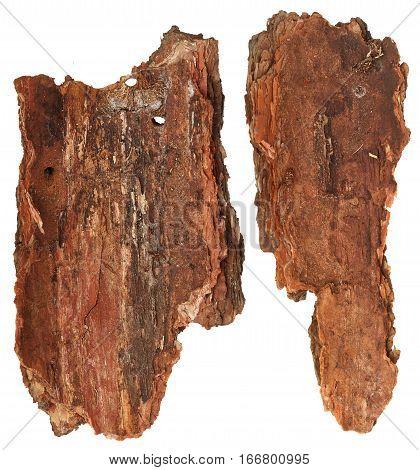 Part of bark tree isolated on white background