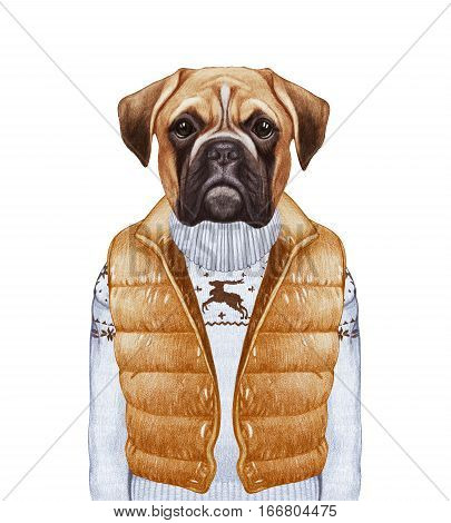 Animals as a human. Boxer in down vest and sweater. Hand-drawn illustration, digitally colored.
