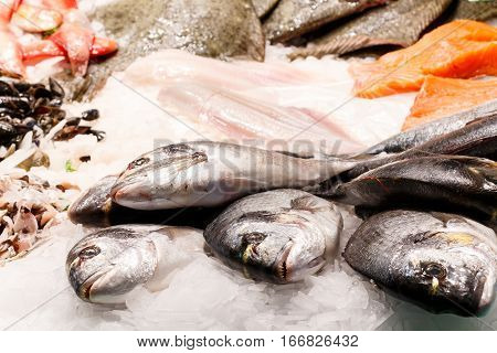 Fresh Dorade Fish Market Barcelona